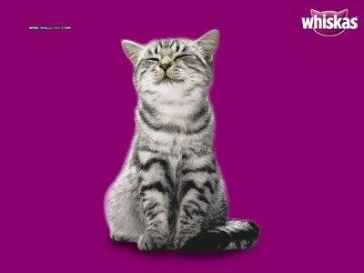 profilethai_whiskas_cat_30.jpg